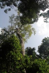 International Biodiversity day