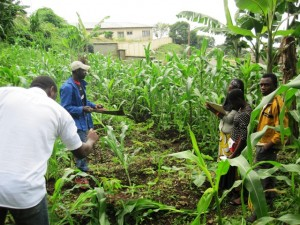 Youths and Agriculture-Green Cameroon