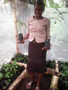 Green Cameroon, Tree nursery pictures
