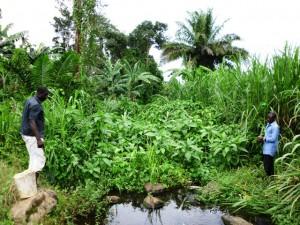 Green Cameroon.Wonjoku Water Project