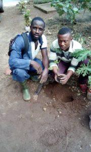 Green Cameroon Trees 6